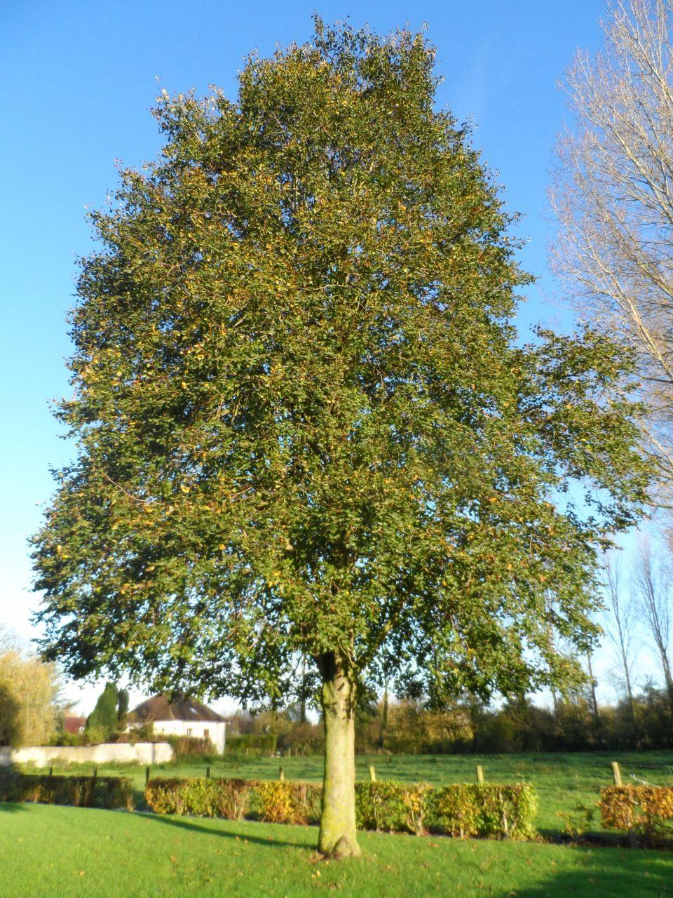 arbreLiberté25ans